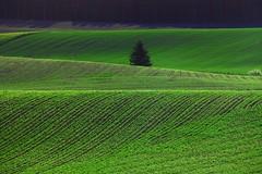 A country landscape 3/12 (Img_9083a) (SeppoU) Tags: suomi finland landscape spring may maisema kevt toukokuu sigma18200mm nummipusula canon450d copyleftby seppouusitupa