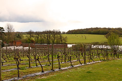 Ickworth House Vineyard (FlyingV99) Tags: park trees music house lake clock church monument kitchen st garden vineyard library room workshop dining rotunda summerhouse ovens ickworth national trust quarters bury edmunds servants