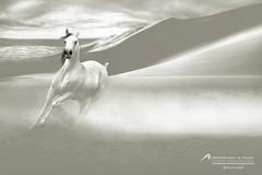 Horse (Abdulrahman Alyousef [ @alyouseff ]) Tags: horse canon 5d mark3     abdulrahman      alyousef