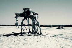 (Farlakes) Tags: tree landscape desert alien class m planet trunk veluwe farlakes