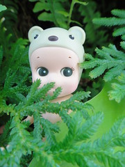 Can someone pass me my pants please! (Kewty-pie) Tags: plants fern nature polarbear sonnyangel peekingtoy