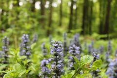 Wildenlohler Wald (perspective-OL) Tags: deutschland natur oldenburg umwelt niedersachsen wildenloh buchenwlder schtzt