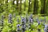 Wildenlohler Wald (perspective-OL) Tags: deutschland natur oldenburg umwelt niedersachsen wildenloh buchenwälder schützt