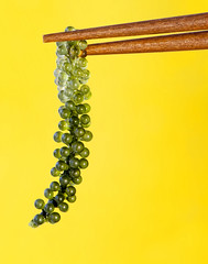 Grape Seaweed (karen walzer) Tags: seaweed japan chopsticks seafood okinawa grapeseaweed