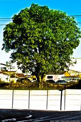 1 (Junior AmoJr) Tags: street color art sol arquitetura brasil photoshop canon sãopaulo chuva pb paisagem junior cor snapfish gettyimages lightroom t3i atibaia photostreet itsnoon gettyimagesandtheflickrcollection gettyimagesbrazil amojr junioramojr crowdart oliveirajunior riafestival