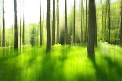Like a Fairytale (Cristian Agostini ( ex Maleficus_1 :)) Tags: wood verde green fairytale dream fairy fate tosco emiliano appennino bosco sogno appennines modenese sognante