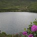 Bay Lough with Bloom