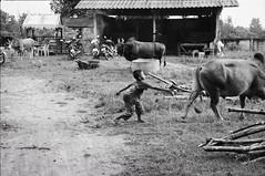 แกล้ง (Sakulchai Sikitikul) Tags: street bw film zeiss 50mm kid kodak bessa 15 200 bullfight sonnar r2a