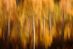 Forest Impressions #3 (Jim Patterson Photography) Tags: california autumn red orange abstract blur mountains nature creek outdoors golden fallcolor aspens panning bishop easternsierras jimpattersonphotography jimpattersonphotographycom seatosummitworkshops seatosummitworkshopscom