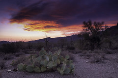(BlackRockBacon) Tags: sunset arizona cactus color desert pentax tucson dslr tamron k5 gatespass tamron1750
