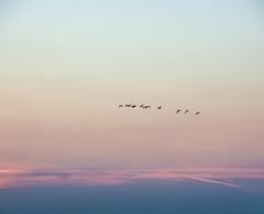 DSC_0422 (Ricardo Fischer) Tags: sunset sea sky birds germany fly nikon sundown balticsea rgen ostsee animas oceam d5100 nikond5100