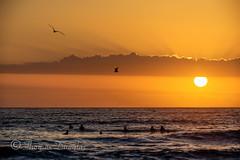Sunrise at Cronulla Beach (600tom) Tags: summer people orange sun seagulls beach water clouds swimming sydney australia cronulla