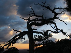 Dead Tree Sunset (zoniedude1) Tags: sunset summer arizona sky cliff southwest nature beauty silhouette clouds forest outdoors evening view silhouettes adventure deadtree monsoon edge rim exploration discovery stormysky mogollonrim therim escarpment coloradoplateau colorfulsky outinthewild apachesitgreavesnationalforest zoniedude1 asnf canonpowershotg11 earthnaturelife gnarlydeadtree deadtreesunset approachingdarkness sitgreavesnf 7800ftelevation rimexpedition2012 pspx8