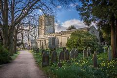 Brailsford Church, Derbyshire (Geraldine Curtis) Tags: yellow purple derbyshire crocus daffodils brailsfordchurchyard