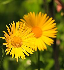 dreamlike spring (sabrina. G) Tags: gelb grn makro garten frhling traumhaft