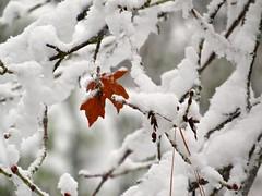 Remembering Winter (morroelsie) Tags: winter snow yosemite yosemitevalley winterinyosemite morroelsie snowinsierras
