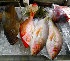 Fish are actually some of the most inteligent animals on our planet. (Just Back) Tags: food fish ice sc fruits shop sushi dead shark words eyes bass joke tail fresh meat scales buy carolina lobster seafood cod pisces purchase snapper fins protein pun chilled gills kaufen crappie