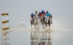 Aktion pur (claudialohmanns) Tags: sport pferde rennen cuxhaven wattenmeer