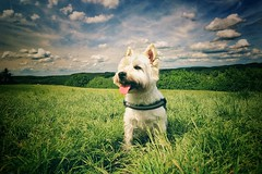 Nando... (hobbit68) Tags: sky canon dog sunset wiese trees outdoor clouds sommer wolken hund himmel sonne animal
