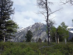2016 05 19 Grand Teton national Park 26a (omigosz) Tags: mountain tree wyoming grandtetonnationalpark