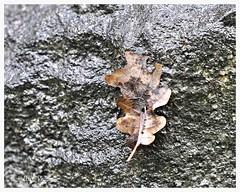Residui d'autunno (Elly212) Tags: hoja rock stone leaf italia foglia roccia leno trentino piedra bacinodiscolombano estatechesembraautunno