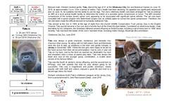Gorilla: Tatu 2 (W i l l a r d) Tags: zoo gorilla genealogy familytree jersey okc tatu oklahomacity gorila gorille stammbaum arbregnalogique