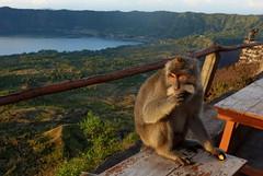DSC02515 (Peripatete) Tags: bali mountains nature sunrise landscape volcano mount monkeys batur