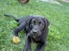 """Shona as a pup • <a style=""""font-size:0.8em;"""" href=""""http://www.flickr.com/photos/77680067@N06/6881770448/"""" target=""""_blank"""">View on Flickr</a>"""