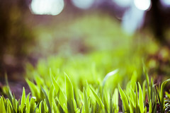 Spring Colors | Green (A. Aleksandravičius) Tags: nature colors lens spring nikon dof bokeh f14 free 85mm mc if 85 ae detached lensing umc samyang d700 nikond700 samyang85mmf14 samyang85 samyangae85mmf14ifmc