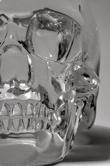 Human Anatomy (Real Cowboys Drive Cadillacs) Tags: blackandwhite white black macro monochrome skull crystal humananatomy 105mm nikon105mm crystalskull d5100 nikond5100