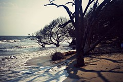 (savplatypus) Tags: ocean tree beach nikon shadows wave shore botanybay