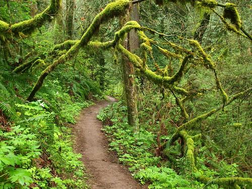 Dog Friendly Walking Trails Portland Oregon