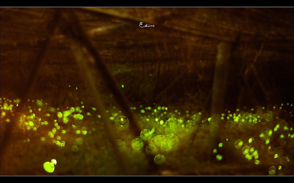 http://farm8.static.flickr.com/7212/7138932573_e4d11c34a0_b.jpg