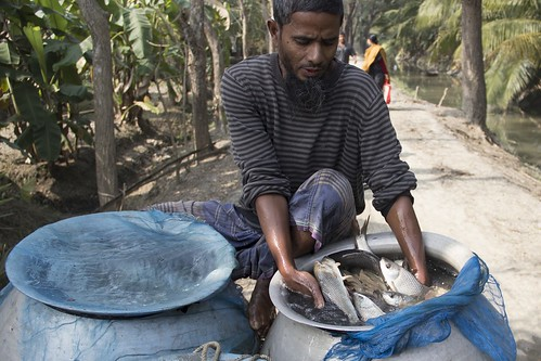 Fish harvest ready for market, Bangladesh. Photo by Samuel Stacey, 2012