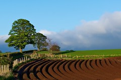 A curve in the field (Photographic View Scotland) Tags: uk tree field scotland countryside farming bluesky drills