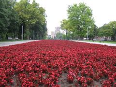 the Path of Red Flowers (m*lena) Tags: church europe serbia belgrade crkva stmarkschurch tamajdan crkvasvetogmarka tasmajdanpark