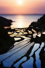 Sun Stained (www.jasonarney.com) Tags: ocean sunset sun water japan spring rice farm  ricefield saga   kyushu  riceterrace          southjapan jasonarney japanscapes soakedricefield shelvedricefield stackedricefield