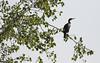 Cormorant (Panayotis1) Tags: nature birds canon aves greece cormorant animalia phalacrocoraxcarbo pelecaniformes chordata phalacrocoracidae φύση canonef400mmf56lusm imathia πουλιά ημαθία κορμοράνοσ τάφροσ66 tafros66 kenkopro300afdgx14x