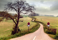 Lane south of Ashmansworth (Beardy Vulcan) Tags: road england tree sign spring hill may hampshire lane end 1981 roadsign winding 20thcentury clearway a343 ashmansworth sidleybottom