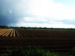 love how symmetrical this all is (GraceCollinsxd) Tags: sky brown green field grass lines clouds bush soil crop symmetrical skt donabate