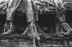 Ankor1994-85 (8hai - photography) Tags: cambodia yang 1994 bahai angkor wat hui 柬埔寨 吴哥 窟 yanghui ankor1994