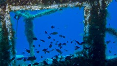 Over the bridge of the P31 (Dodraugen) Tags: fish underwater diving malta shipwreck wreck warship p31 gozo comino