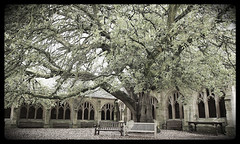 "Harry Potter's oak tree Oxford • <a style=""font-size:0.8em;"" href=""http://www.flickr.com/photos/44919156@N00/7375866580/"" target=""_blank"">View on Flickr</a>"