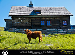 Highland Cattle guarding the Cottage (Pyranha Photography | 1250k views - THX) Tags: mountain green nature berg grass animals canon landscape photography eos austria tiere kuh cow rind sterreich google flickr cattle hiking natur cottage htte wiese images krnten carinthia berge pi highland ren plus gras landschaft wandern gettyimages facebook dobratsch hochlandrind pyranha twitter gettty 60d pyranhaphotography