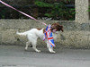 He's ready (P&KC Archive) Tags: animal sport fun photography scotland community perthshire streetscene celebration 20thcentury relay olympicflame torchrelay localhistory olympictorch torchbearers historicevent civicpride perthandkinross ecsochistory recordinghistory