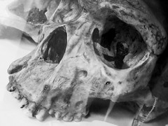 Half Skull (shaire productions) Tags: bw halloween nature dark skeleton person photography skull scary natural teeth picture pic monotone human photograph bones horror grayscale creature skeletal imagery
