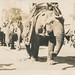 Circus elephants march in a parade