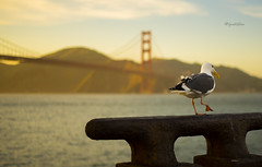 Timed shot (lpshikhar) Tags: sanfrancisco california street sunset portrait sky blackandwhite birds landscape photography scenic goldengatebridge baybridge bayarea
