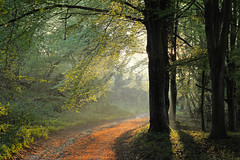 Evening sunlight (Simon Verrall) Tags: trees light sunset forest woodland sussex evening track westsussex path may beech midhurst 2016 thesouthdowns beptondown