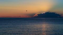 La promessa (gio_running_away) Tags: sea sun seascape clouds sunrise freedom mare sofia alba seagull promessa annaematteo
